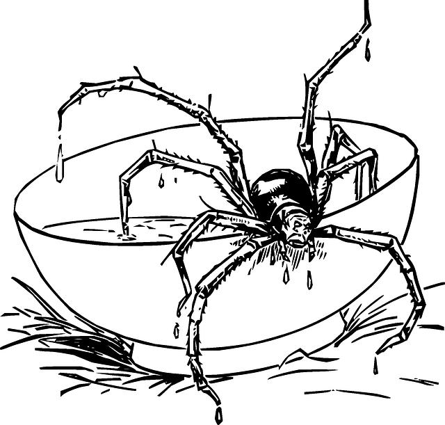 640x611 Drawing, Cartoon, Spider, Web, Dot, Draw, Com, Fun