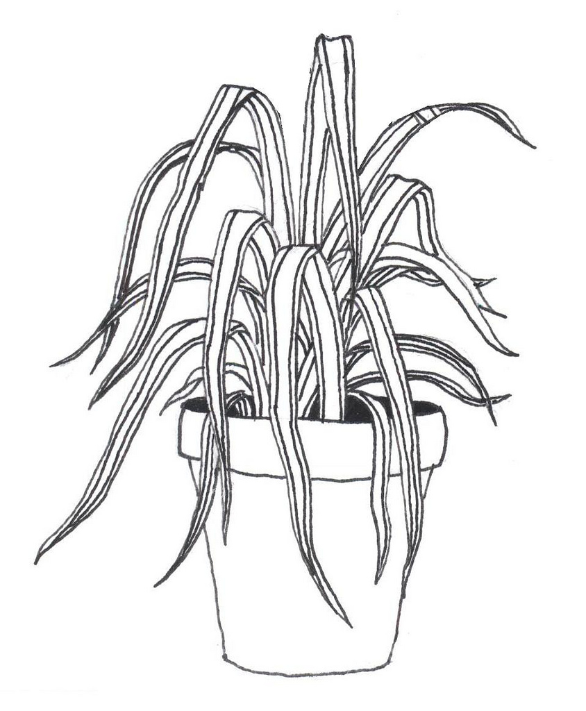 844x1024 Spider Plant! A Rough Sketch For A Tattoo I Just Got.