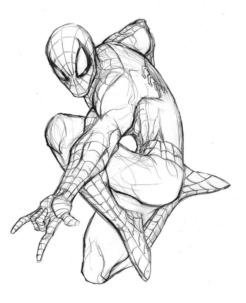 805x991 Spider Man Pencil Drawing Photos Spiderman Pencil By