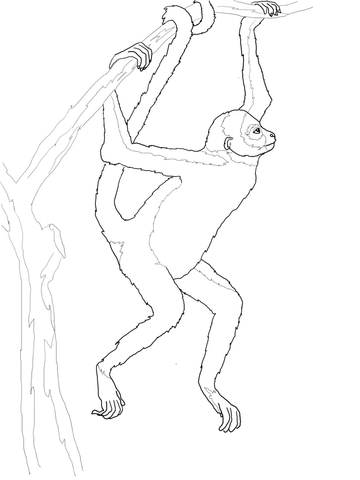 360x480 Hanging Spider Monkey Coloring Page Free Printable Coloring Pages