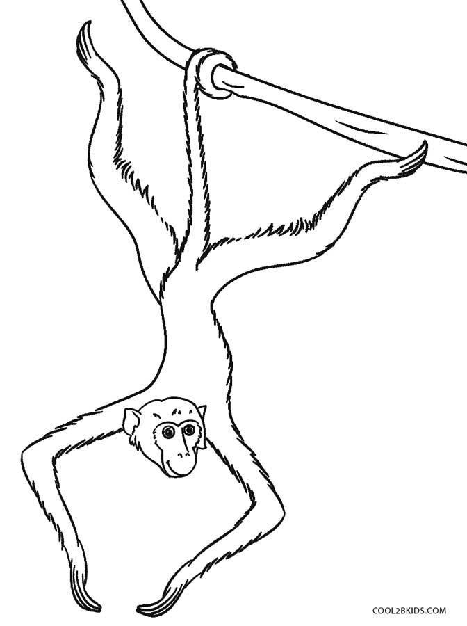 672x900 Image Result For Spider Monkey Line Art 3d Spider