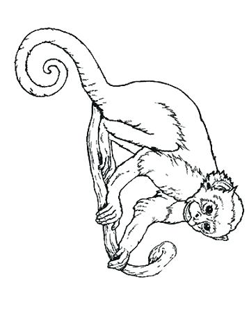 358x471 Monkey Color Pages Spider Monkey Coloring Pages Spider Monkey