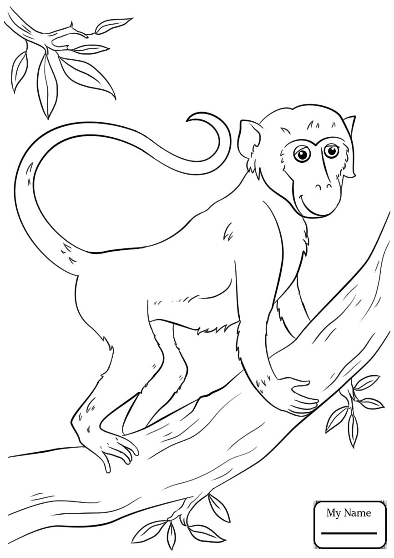 866x1224 Cartoon Monkeys