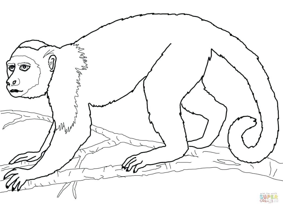 1200x880 Coloring Spider Monkey Coloring Pages Colouring. Spider Monkey