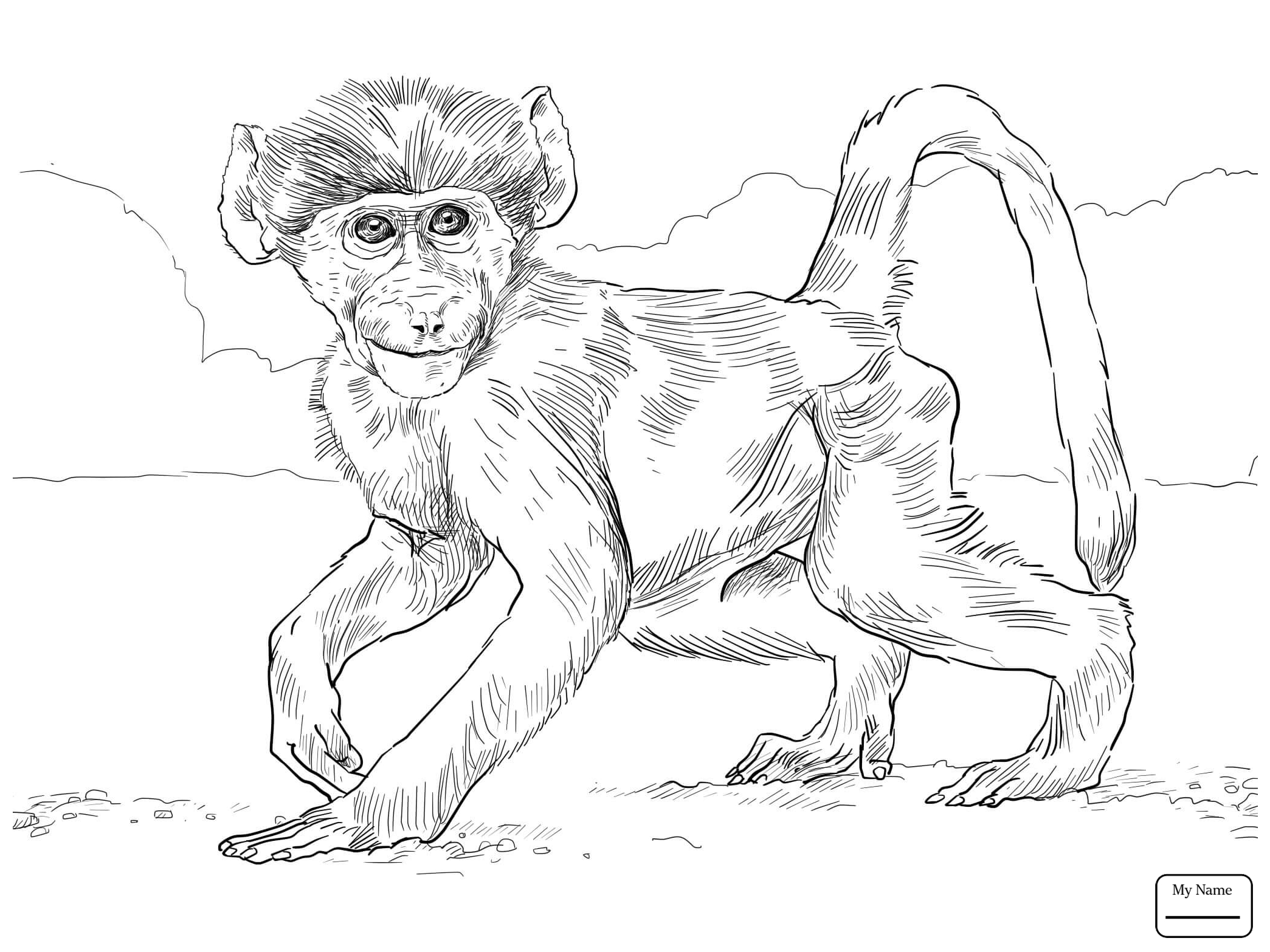 Spider Monkey Drawing at GetDrawings.com | Free for personal use ...