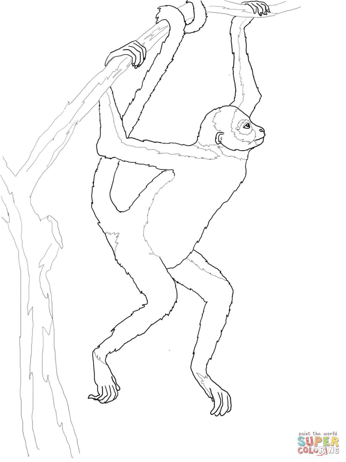 1200x1600 Spider Monkey Coloring Pages Coloring Page For Kids