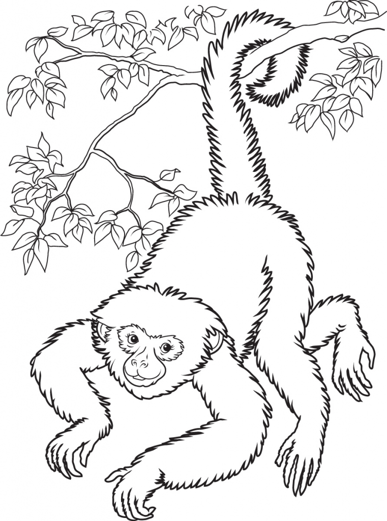 761x1024 Free Printable Monkey Coloring Pages For Kids Within Spider Monkey