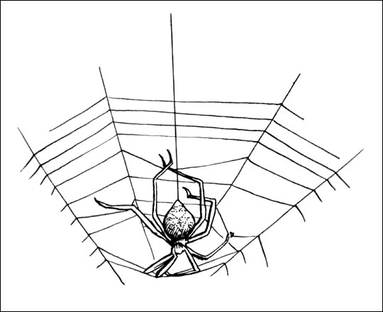Spider On Web Drawing