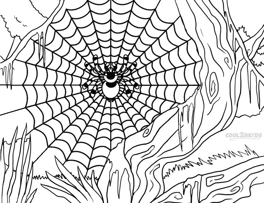 850x654 Printable Spider Web Coloring Pages For Kids Cool2bkids