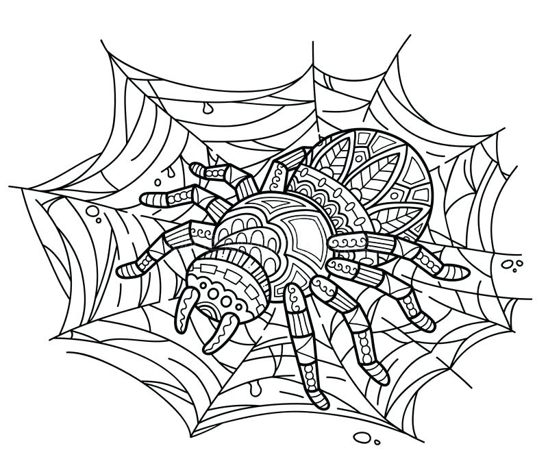 800x686 Spider Coloring Book Plus Spider Web Coloring Spiderman Coloring