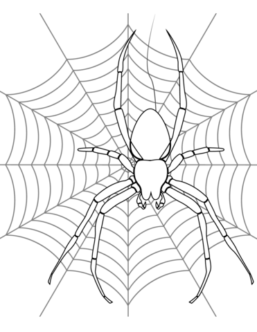 371x480 Spider On Its Web Coloring Page Free Printable Coloring Pages