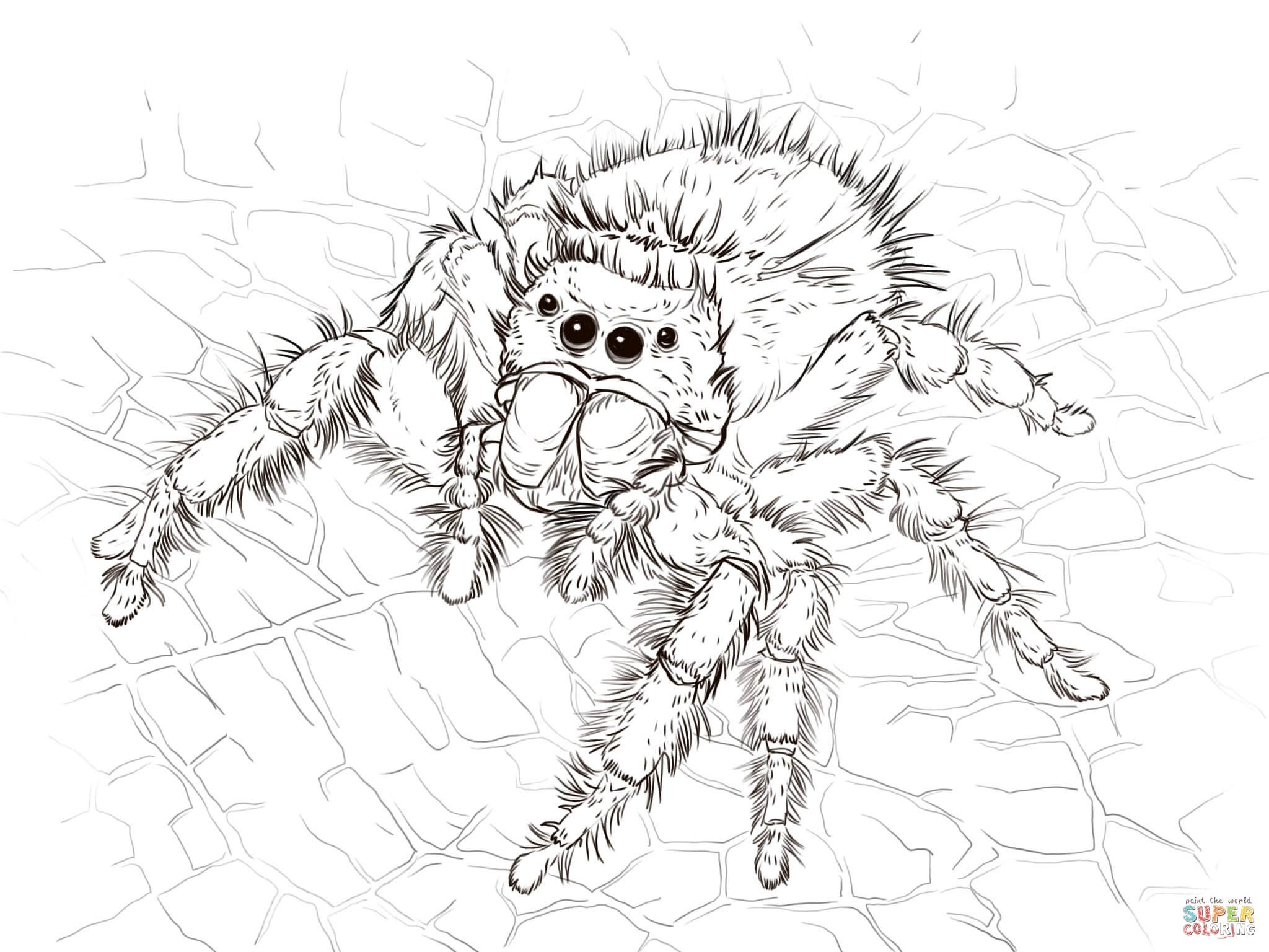 2048x1536 Spider Man Web Of Shadows Coloring Pages Free Draw To Color