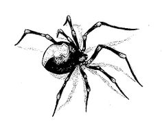 236x188 Black Widow Spider Drawing Stock Image