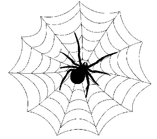 Spider Web Cartoon Drawing