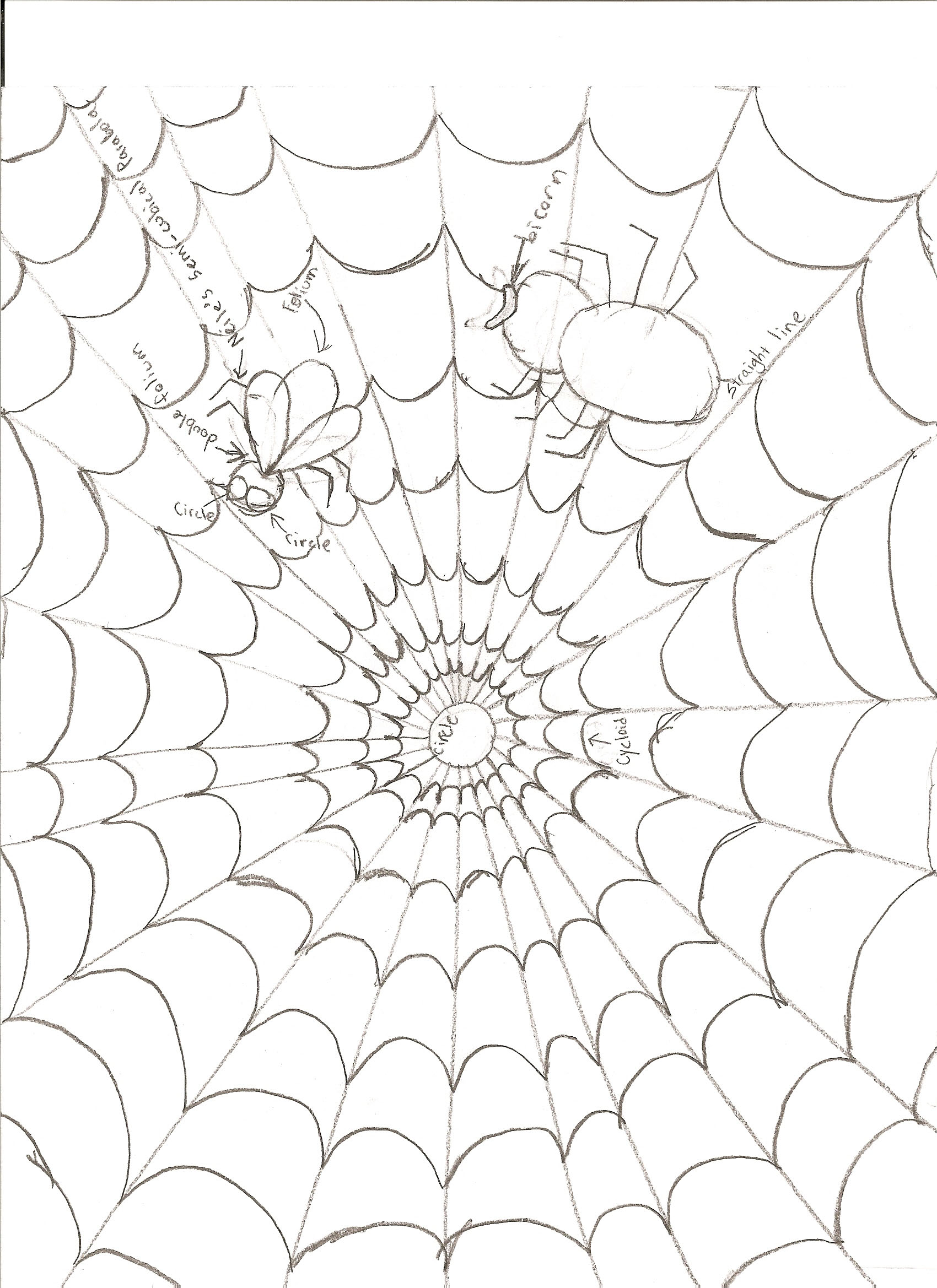 Spider Web Line Drawing