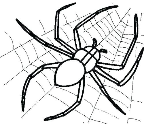 500x432 Spider Color Page Spider Web And Spider Coloring Page Spider Web