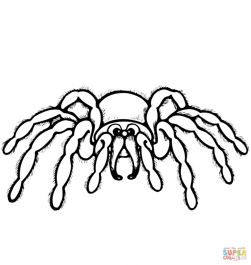 974x1025 Coloring Pages Spiders Coloring Pages Cartoon Spider Page