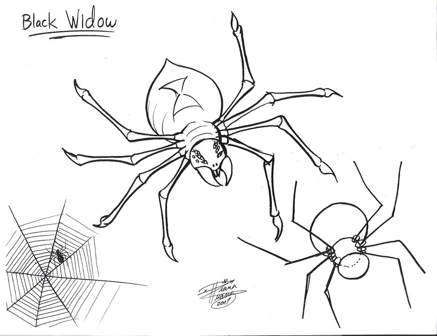 900x692 Draw A Spider By Diana Huang