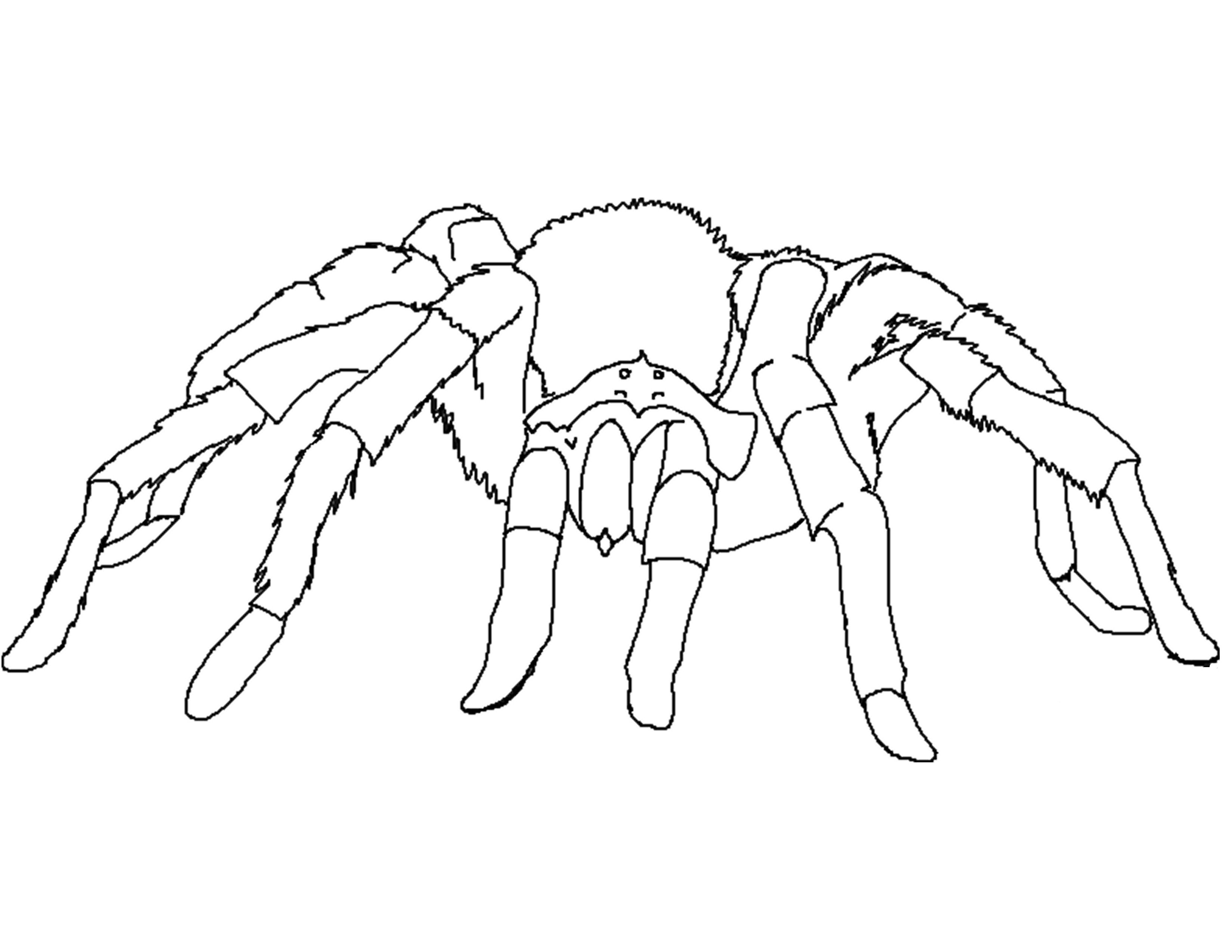 3300x2550 Spider Coloring Pages 2 Drawings Spiders Colouring Pages