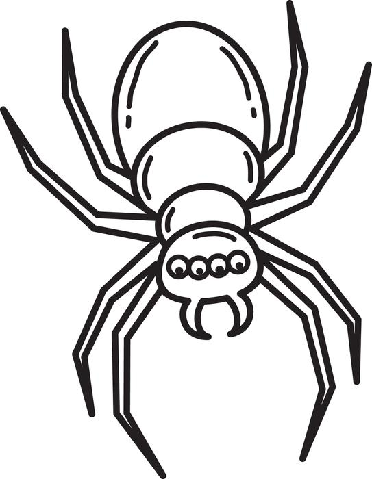 543x700 Terrific Spider Coloring Page 90 For Line Drawings With Spider