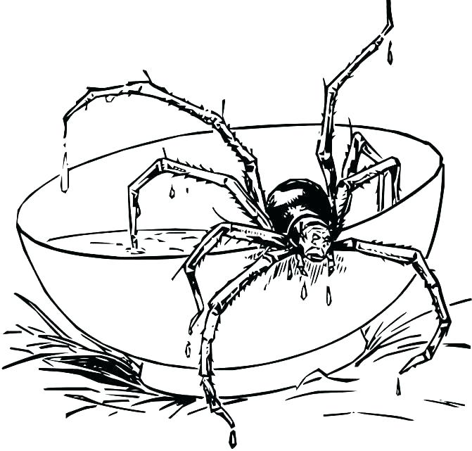 671x641 Halloween Sign Of Spider Webs Coloring Page Spiderweb 3 Halloween