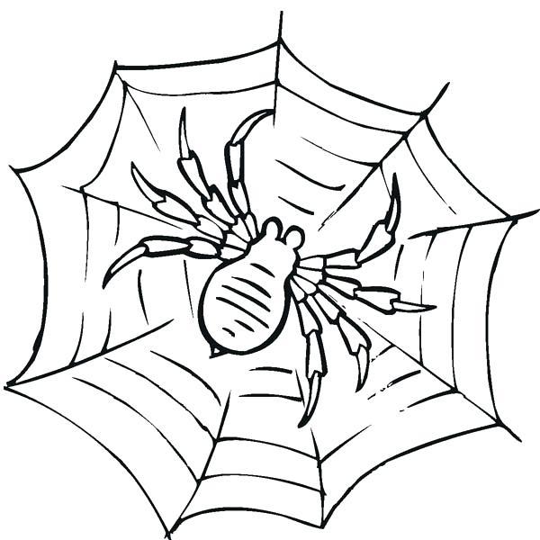 600x600 Preschool Spider Web Coloring Page Coloring
