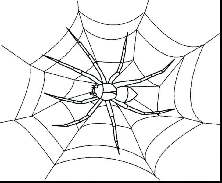 728x600 Printable Spider Coloring Pages Tarantula Page A Closeup Drawn