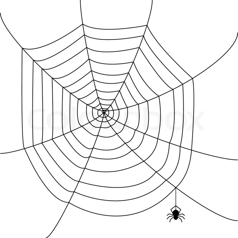 800x799 Spider Web Stock Vector Colourbox