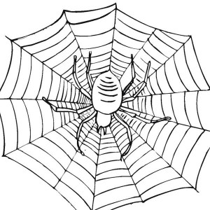 300x300 Spiders Can Spin Amazing Spider Web Coloring Page Color Luna