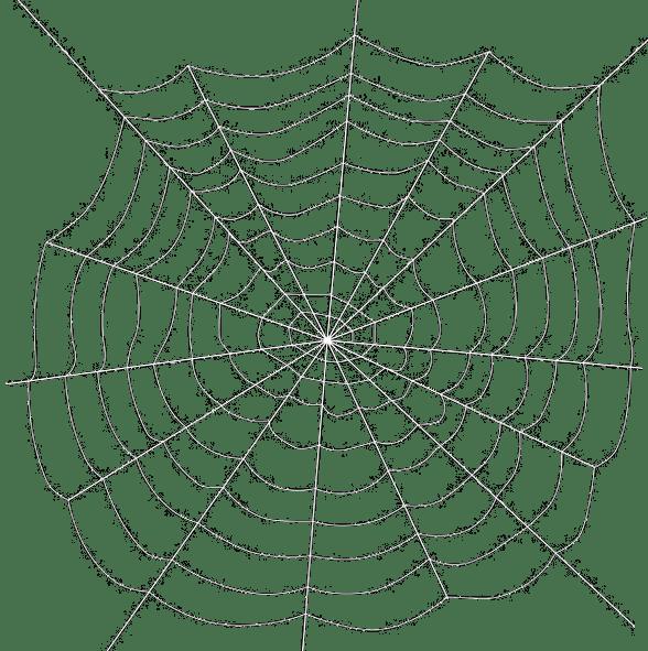 588x591 Spiders Web Transparent Background