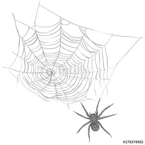 500x500 Spiderweb Sketch Vector Illustration. Spider Web Hand Drawing Set