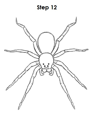 386x500 Pin Drawn Spider Web Easy 1. Pin Drawn Legs Spider 3. Draw Spider