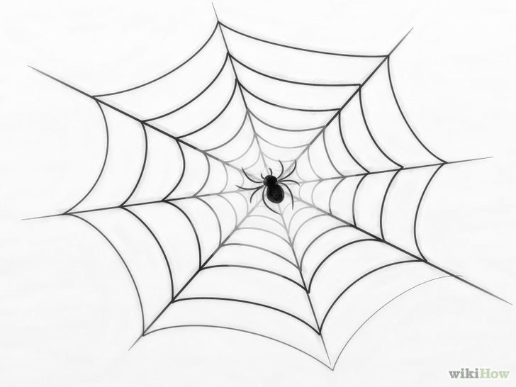 728x546 Draw A Spider Web Spider Webs, Spider And Draw