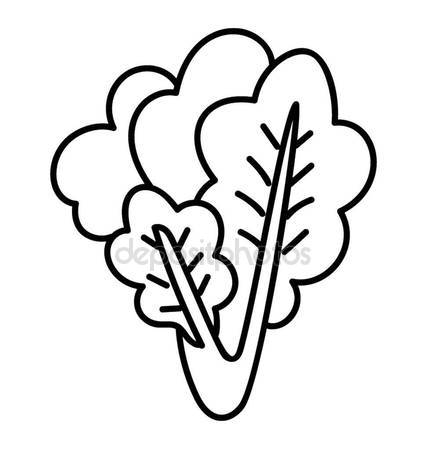 427x449 Bunch Of Spinach Stock Vectors, Royalty Free Bunch Of Spinach