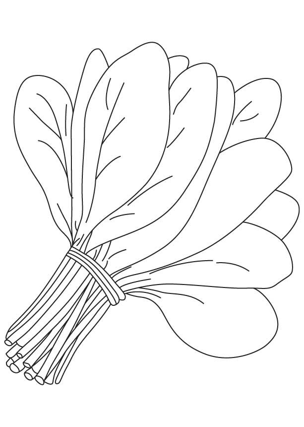 613x860 Bunch Spinach Leaves Coloring Page Download Free Bunch