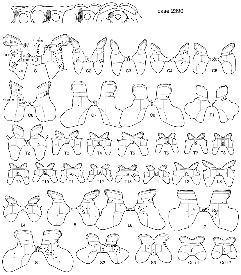 The Best Free Labeled Drawing Images Download From 232 Free