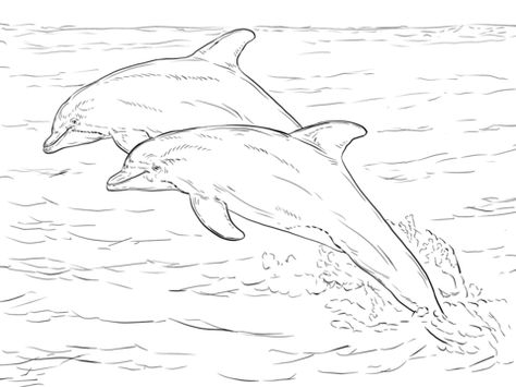 Spinner Dolphin Drawing at GetDrawings