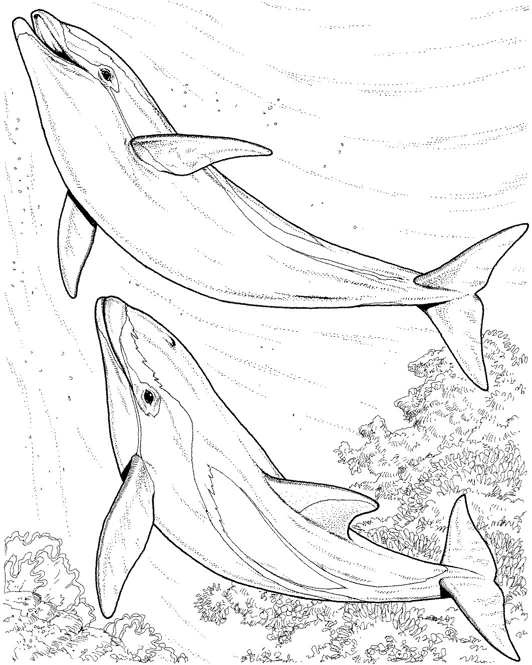 1062x1329 Dolphin Coloring Pages