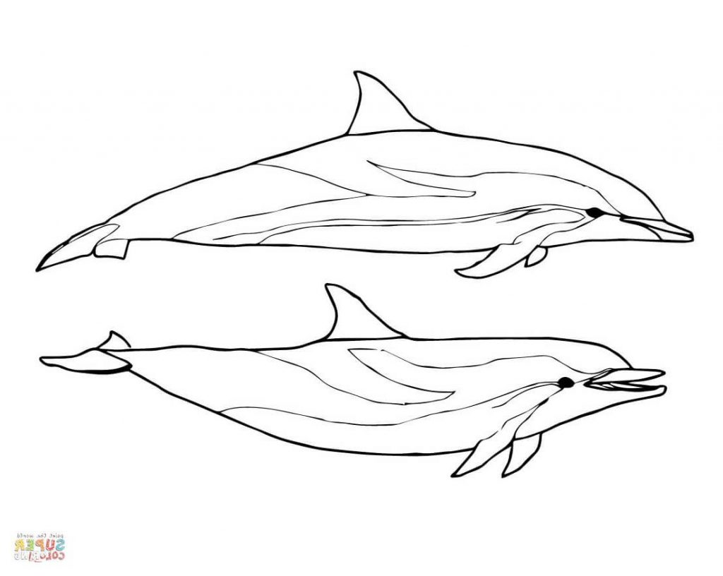 1024x816 Bottlenose Dolphin Coloring Page