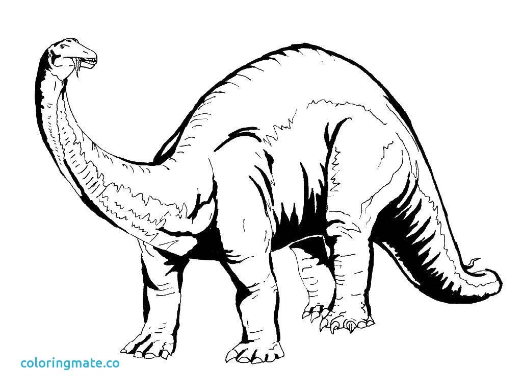 Spinosaurus Drawing