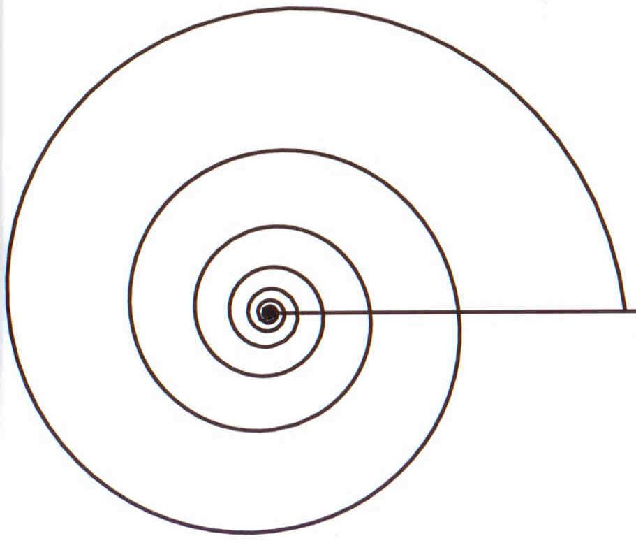 911x777 Filelogarithmic Spiral.png