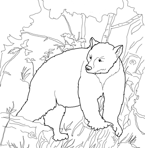 471x480 Kermode Bear Coloring Page Free Printable Pages
