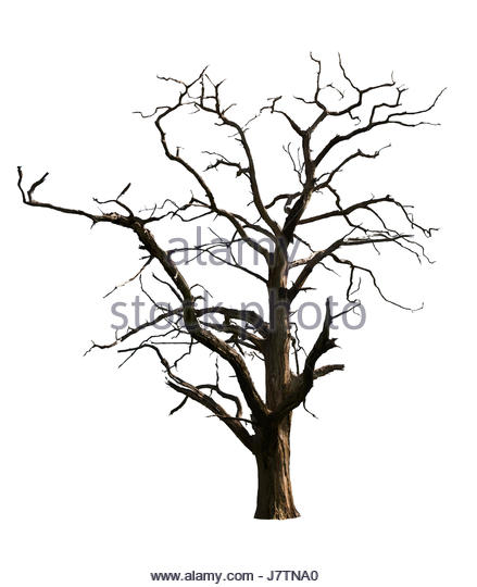 439x540 Spooky Tree Cut Out Stock Images Amp Pictures