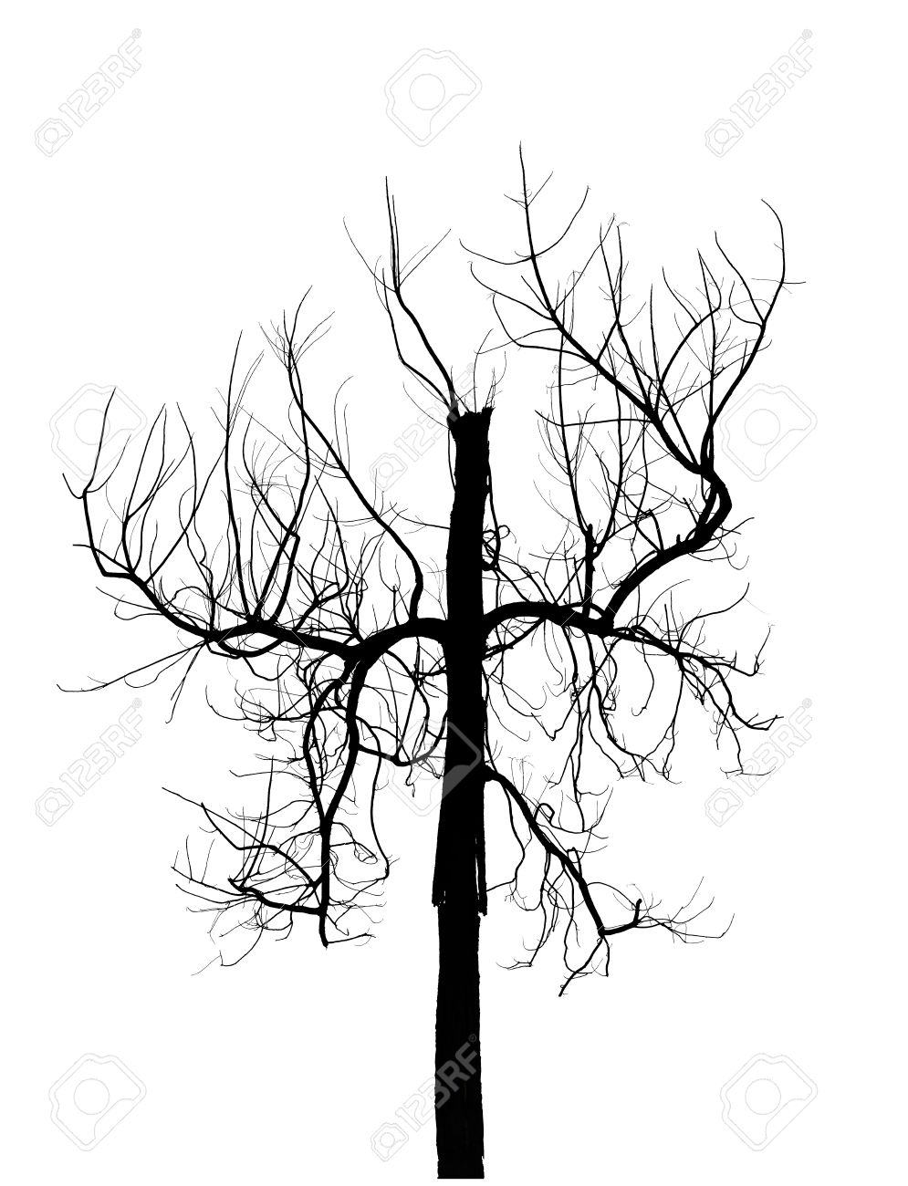 995x1300 Dead Tree Silhouette Isolated On White Background. Creepy Tree