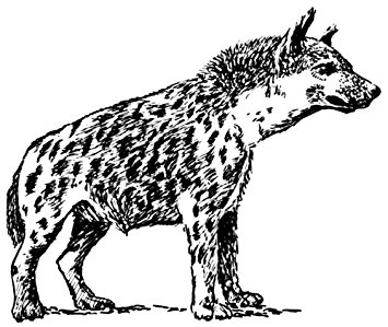 355x299 Pack Of 4 14cm X 10cm Gloss Stickers Line Drawing Hyena Amazon.co