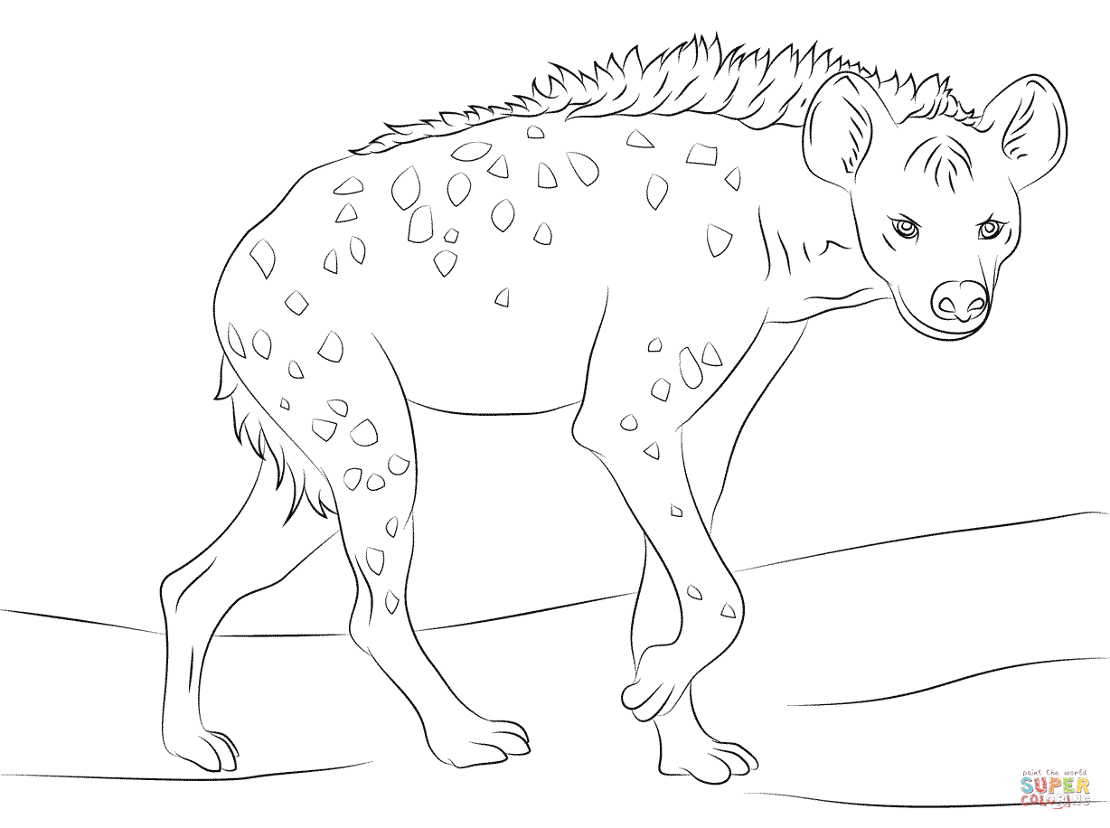 1228x916 Spotted Hyena Coloring Pages Spotted Hyena Coloring Pages