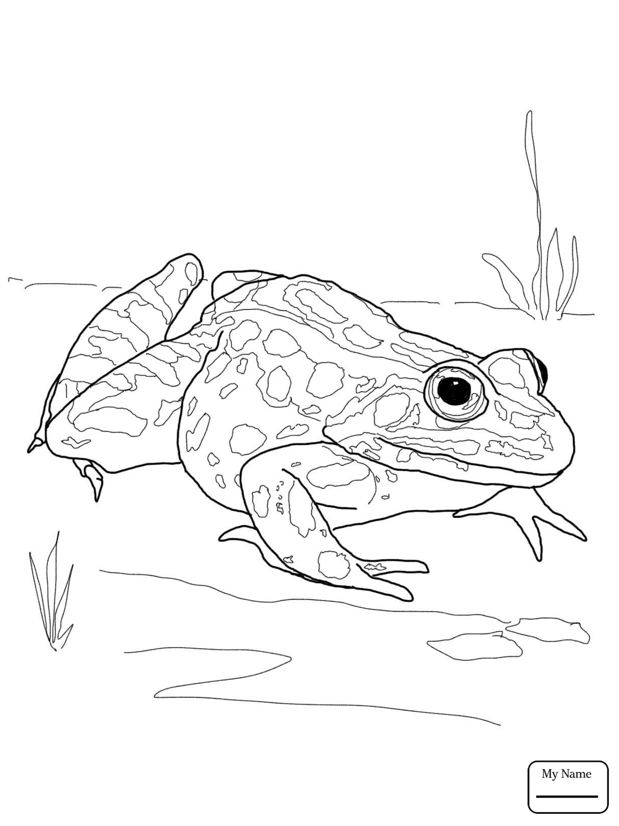 amphibian coloring pages | Spotted Salamander Drawing at GetDrawings.com | Free for ...
