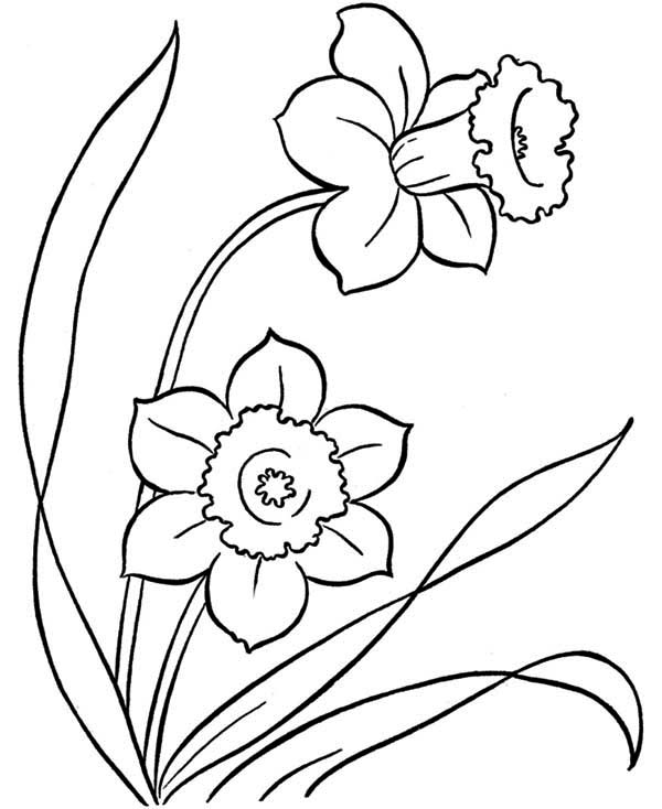 600x734 Awesome Drawing Of Spring Flower Coloring Page Color Luna