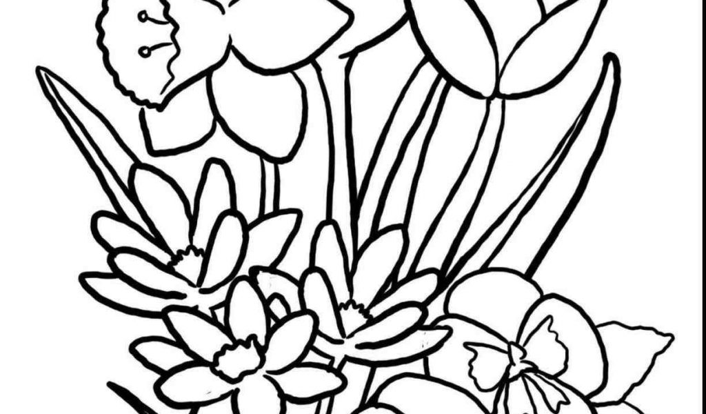 1024x600 The Images Collection Of Season Drawinfo Season Spring Drawing