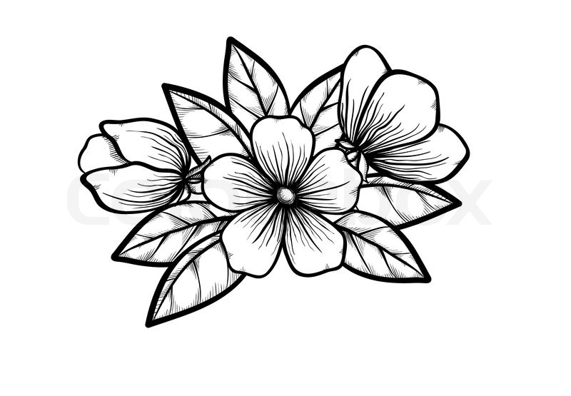 800x555 Branch Of A Blossoming Tree In Graphic Black White Style, Drawing